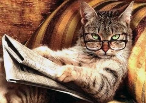 Алмазная Мозаика 20x30 Кот читает газету