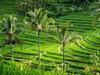 Серф-кемп на Бали: все самое лучшее за 2 недели