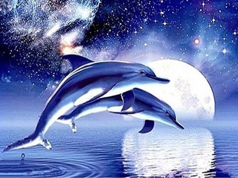 Алмазная Мозаика 40x50 Два дельфина