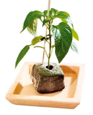 Кокосовый кубик для проращивания растений