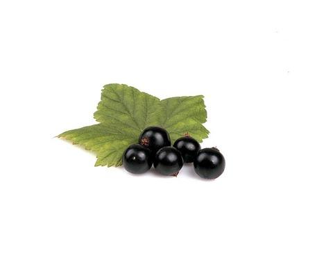 Смородина Чёрная, 1 кг