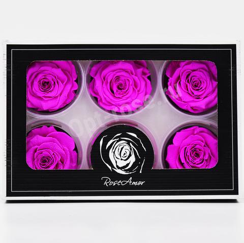 Стабилизированный Бутон Розы Rose Amour XL. Цвет Фуксия (Диаметр 6-7см)