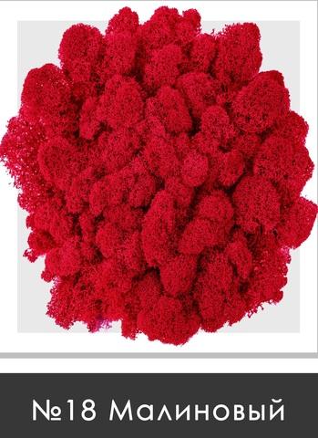 Стабилизированный мох (ягель) цвет №18 Малиновый