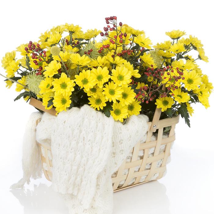 Композиция с желтыми хризантемами