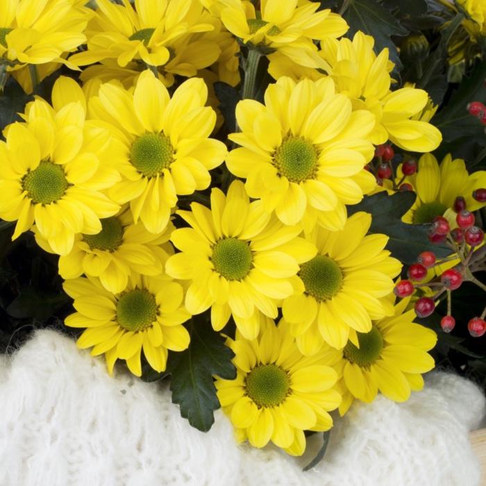 Купить хризантему ромашковую желтую в Перми