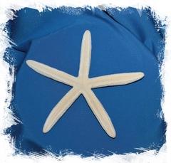 Пальчиковая морская звезда