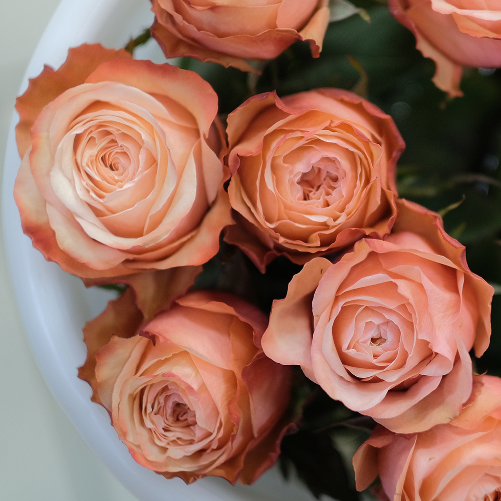 Купить пионовидные  розы Кахала Пермь коричневый шоколадный молочный двухцветный