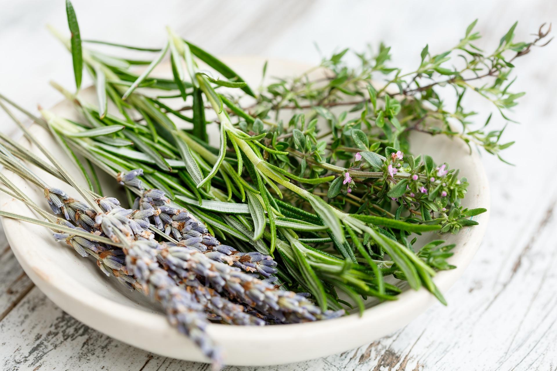 Травы Чабрец (Тимьян) thymus-4.jpg