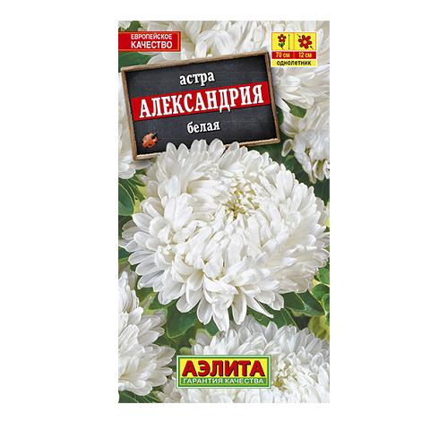 Астра Александрия белая (Аэлита)