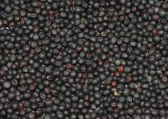 Рапс семена BIO, 100 гр (Италия)