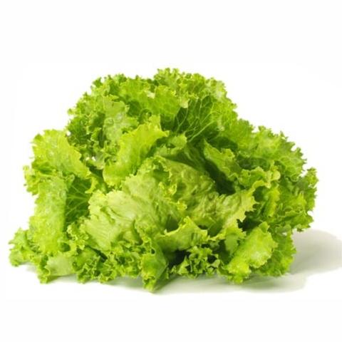 Салат GREEN ECO Батавия 1 шт
