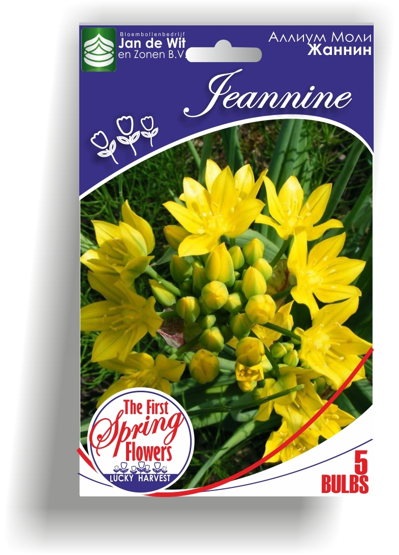 Аллиум  моли  Allium Moly Jeannine   ( Жаннин) (Лук золотой, Лук Моля) Jan de Wit en Zonen B.V. Нидерланды