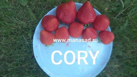 Земляника садовая   Cory (Кори)