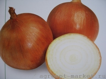 Репчатый Хилтон F1 семена лука репчатого (Syngenta / Сингента) хилтон.jpg