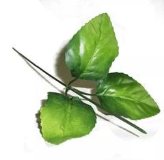 Стебель с тройным листом яблони