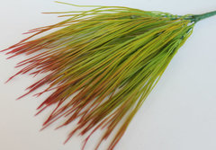 Трава осока-овсяница, 32 см.