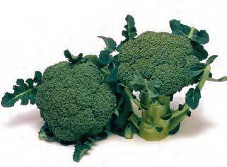 Брокколи Маратон F1 семена капусты брокколи (Sakata / Саката) МАРАТОН_F1_семена_овощей_оптом.jpg