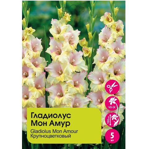 Гладиолус Мон Амур крупноцветковый 5шт