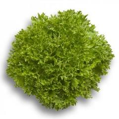 Экспертайз семена салата хрустящего с сильно рассеченным листом (Rijk Zwaan / Райк Цваан)