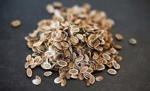 Укроп семена