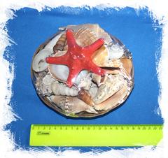 Морские ракушки для декора