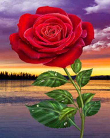 Картина раскраска по номерам 30x40 Красная роза на фоне заката  (арт. KTL1492)