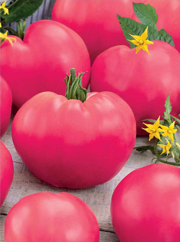 Семена Томат Торбей F1 розовый
