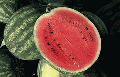 Соренто F1 семена арбуза (Syngenta / Сингента)