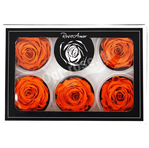 Стабилизированный Бутон Розы Rose Amour XL. Цвет оранжевый (Диаметр 6-7см)