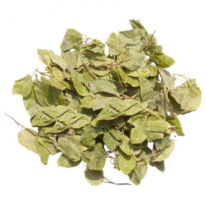 Травы Боровая матка (Ортилия) orthilia-secunda-1.jpg