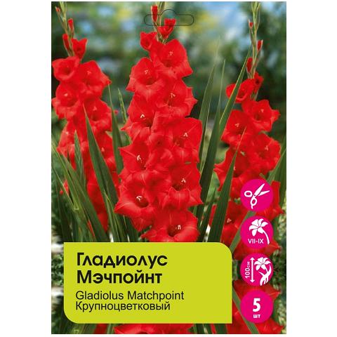 Гладиолус Мэчпойнт крупноцветковый 5шт