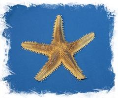 Звезда шерифа 14 - 15 см