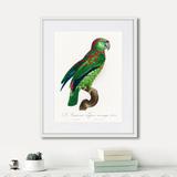 Джон Гульд - Beautiful parrots №4, 1872г.
