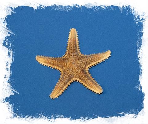 Звезда Шерифа 8 - 9 см