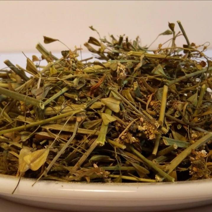 Травы Пастушья сумка capsella-04.jpg