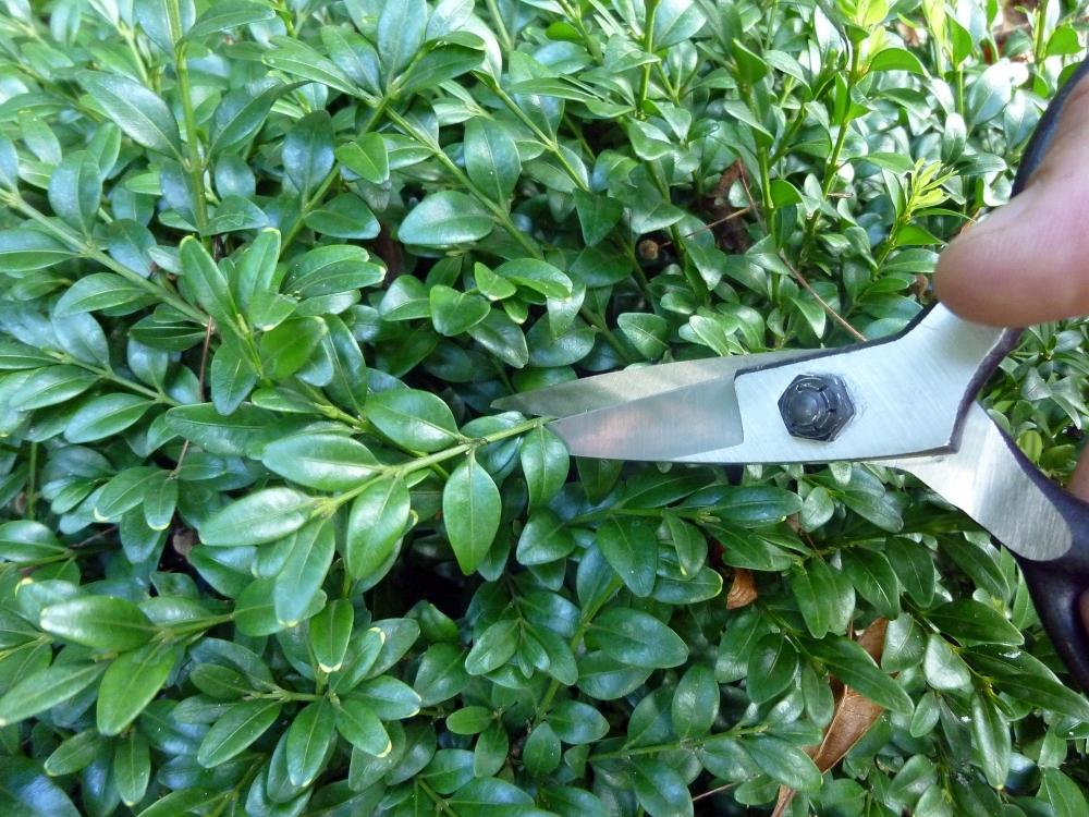 Ножницы для бонсай Okatsune 203, 210/55 мм