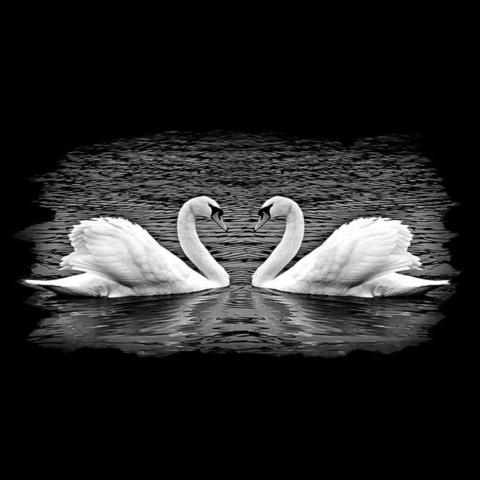 Лебедь №1