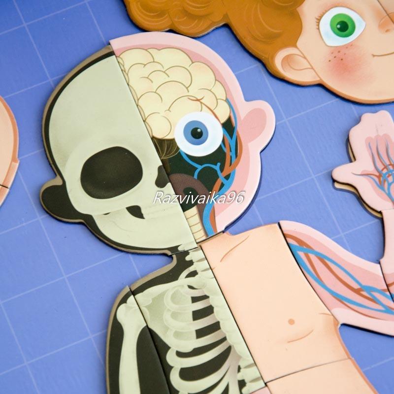 магнитная анатомия человека
