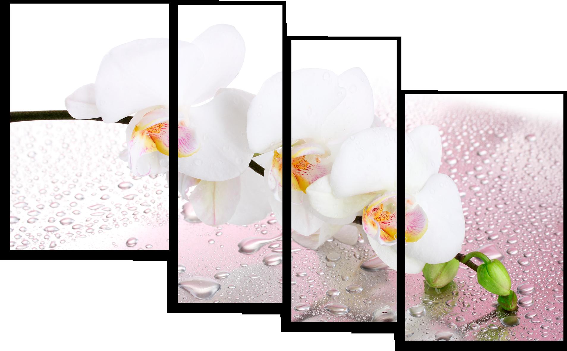 """Цветы Модульная картина """" Белая орхидея"""" М665.png"""