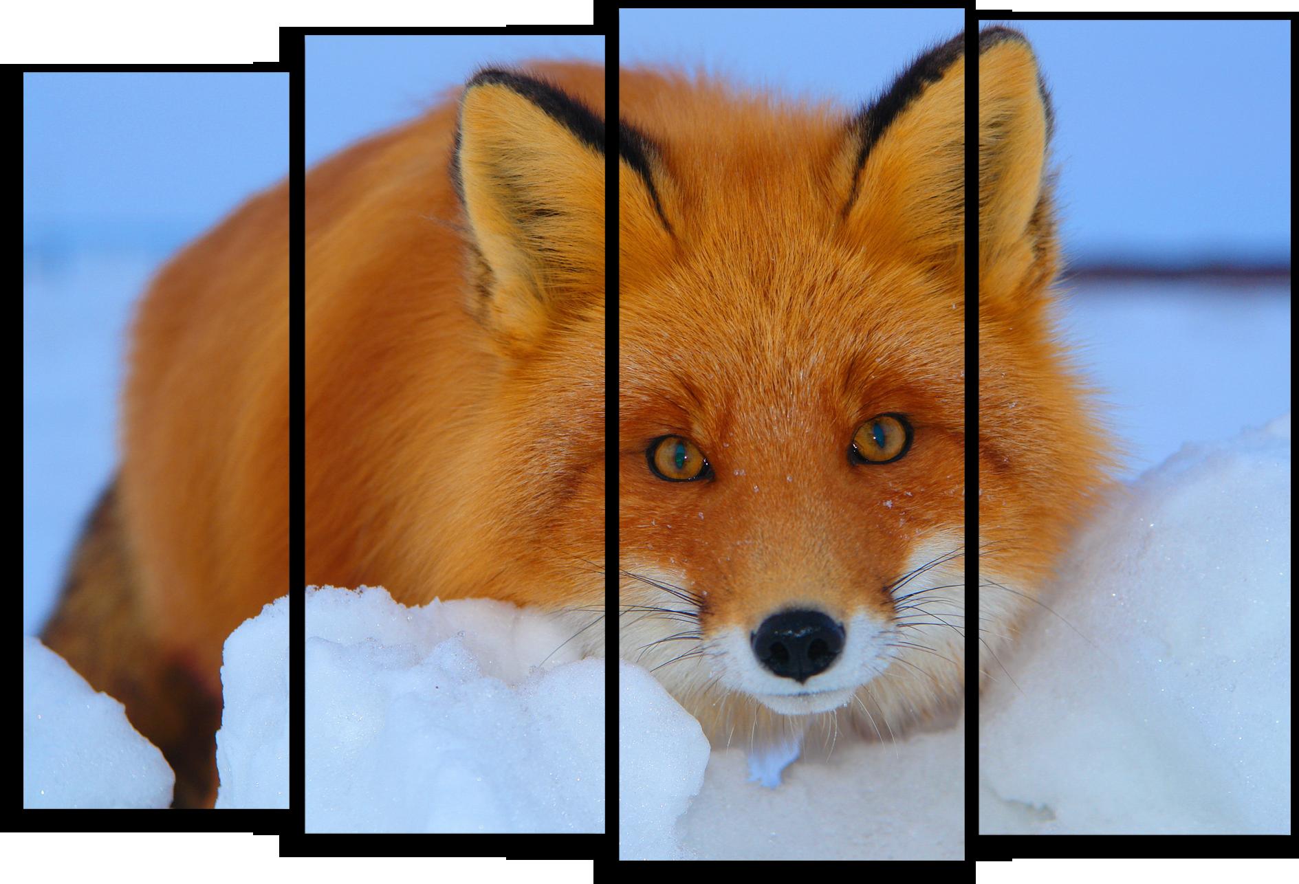 """Животные Модульная картина """"Хитрая лиса"""" М411.png"""
