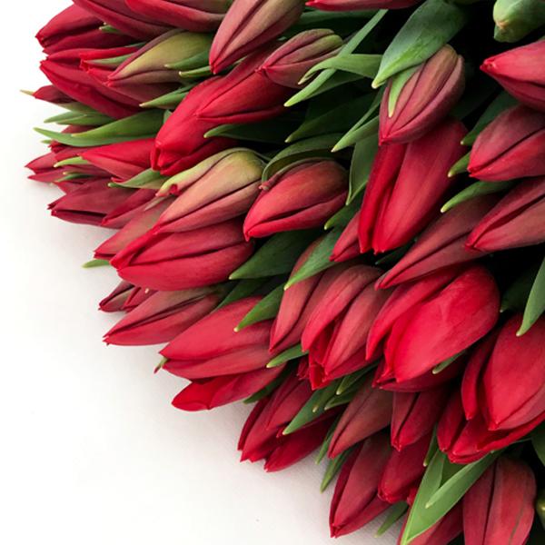 красные тюльпаны на 8 марта