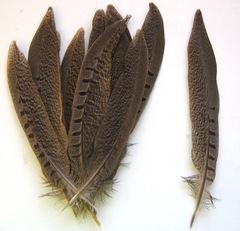 Перо фазана  натуральное (цена за 1 шт), выбрать размер