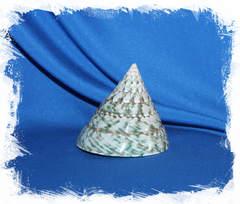 Тектус Пирамис