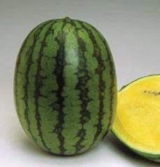 Голден Тайгер F1 семена арбуза (Vilmorin / Вильморин)