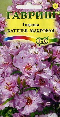 Семена Годеция Катлея махровая, Одн