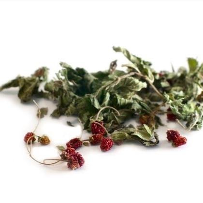 Травы Земляника, лист wild-strawberries-leaf-01.jpg