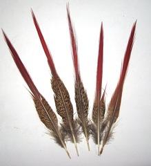 Перо фазана  острое с красным кончиком УЦЕНКА (выбрать размер)