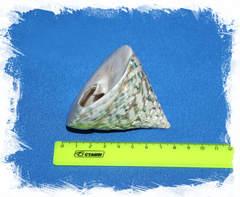 Тектус Пирамис размер