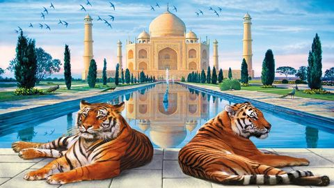 Картина раскраска по номерам 40x50 Тигры отдыхают на фоне мечети