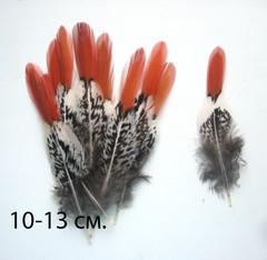 Перо фазана  с рыжим кончиком (выбрать размер)